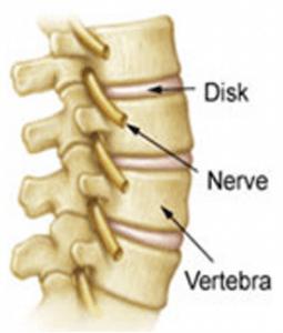spinalvertebra