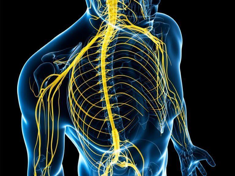 nervous-system