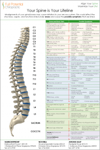 Your_Spine_is_Your_Lifeline
